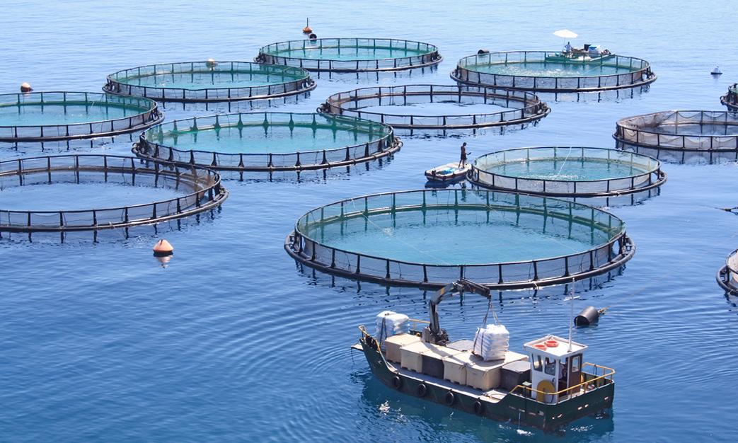 Dakhla capitale de l'aquaculture
