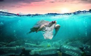 La pollution plastique, un vrai fléau